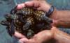 turtles_blogs userpic