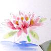 lotusunderwater
