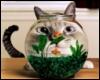kot-аквариум