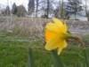 rosethorn112 userpic