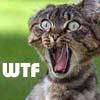 wtf cat