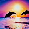 Jess: dolphins