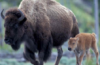 solid_bison15 userpic