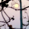 moonrise tangle