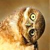 Чубакка: bird