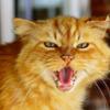 cat_foxx
