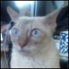 Городская Сова: котя