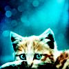 kitteh on blue