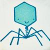 bakteriofagi