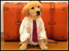 Рабочий пес