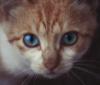Глазастый кот