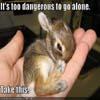 licheyou: Bunny