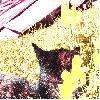 sleepifoxshore9 userpic