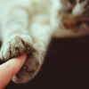 [R] holding out a finger :: cat