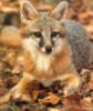 silver_fox9 userpic