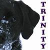 Trinity-My Trinity