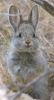 sirirabbit userpic