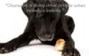 groucho_kitty userpic