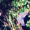 valentines_lost userpic