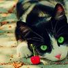 tuonelankoivu: Kitten :3