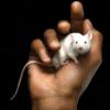 Мышь в ладошке
