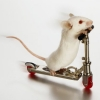 Самокатающаяся мышь