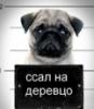 zigu userpic