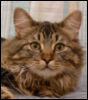 CatDog: Yoshi