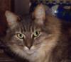 freyaskat userpic