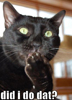 black_cat_14
