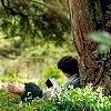 Books - Frodo