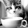 Cats: Coffeecat