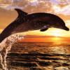 aleksey_delfin userpic