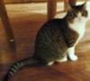 Алиса кошка