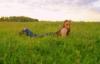 трава, поле, закат