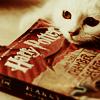 HP // book