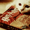 Books - Potter cat