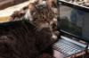кошка с компом