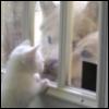 Kitty Dog