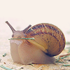 poppyonmars userpic