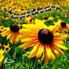 alligator138: Yellow flowers