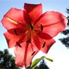 autumns_garden userpic