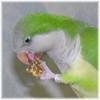 pjkerr128 userpic