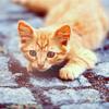kitten by madnesscarousel