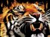 pic#tiger