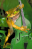only_froggy userpic