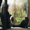 з кішкою на вікні