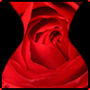 rose_incognito userpic