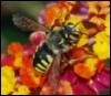 rainbobee userpic