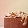 Pink Ranger: kitten: nap
